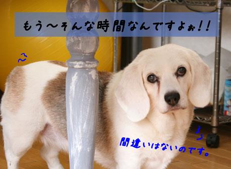 2_20100712154236.jpg