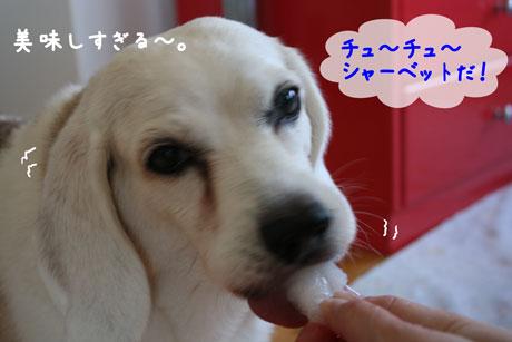 2_20100724171020.jpg