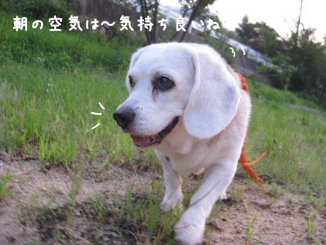 2_20100726103242.jpg