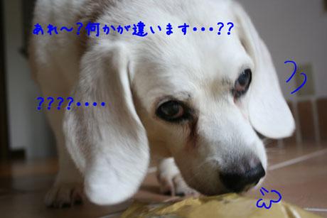 2_20100728202236.jpg