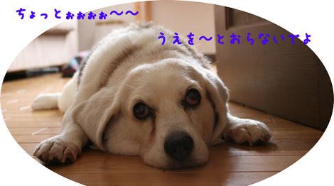 2_20100731143708.jpg