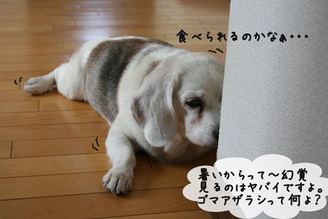 2_20100818111316.jpg
