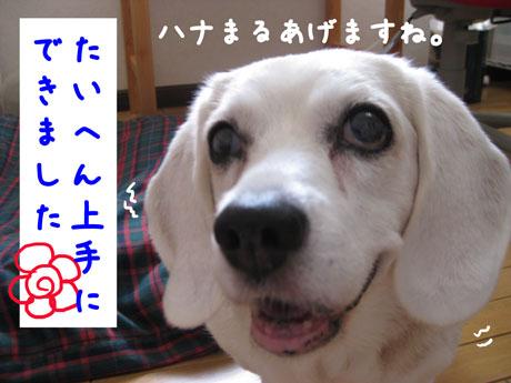2_20100901140918.jpg