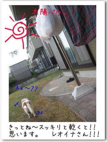 2_20100904182445.jpg
