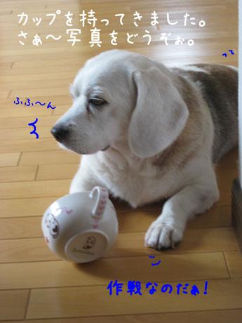2_20100921144626.jpg