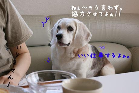 2_20100925134117.jpg