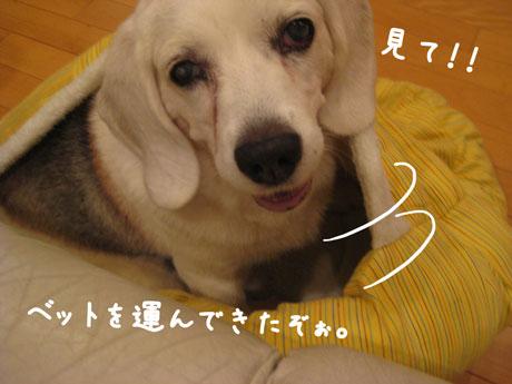 2_20101004134601.jpg