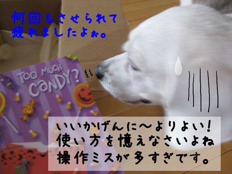 2_20101026000113.jpg
