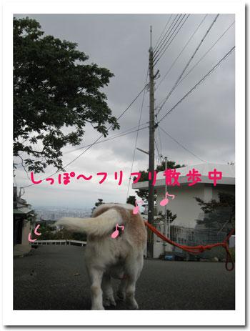 2_20101030145732.jpg