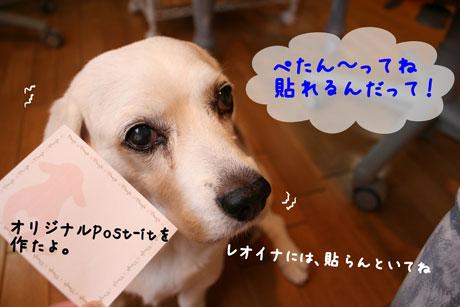 2_20101031163140.jpg