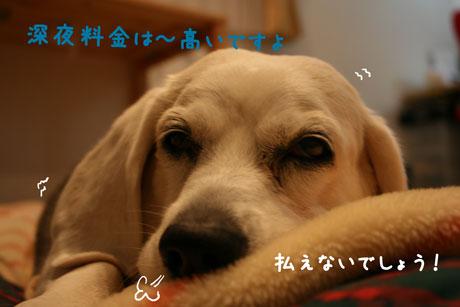 2_20101124212848.jpg