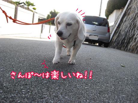 2_20101126145212.jpg