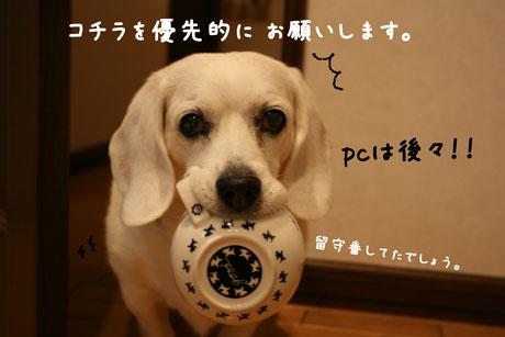 2_20101203200101.jpg