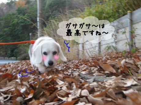2_20101204162619.jpg