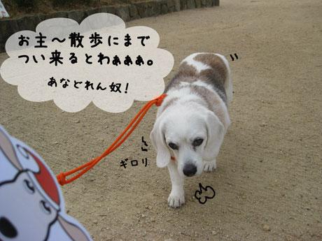 2_20101207144900.jpg