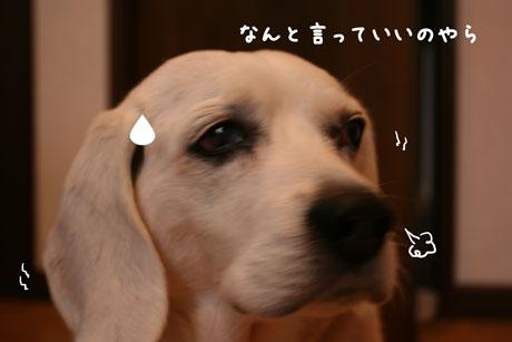 2_20101216154020.jpg