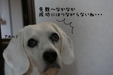 2_20101220153232.jpg
