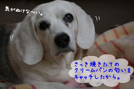 2_20101223160821.jpg