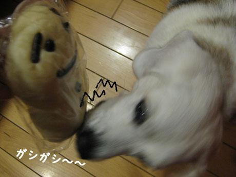 2_20101226210046.jpg