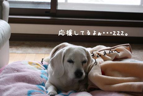 2_20101230171703.jpg
