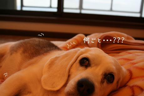 2_20110103171208.jpg