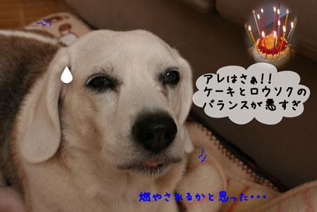 2_20110106155325.jpg