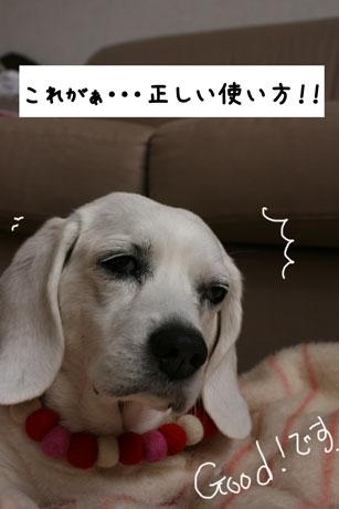 2_20110112144803.jpg