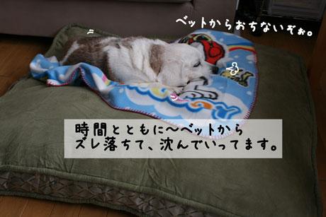 2_20110114114026.jpg
