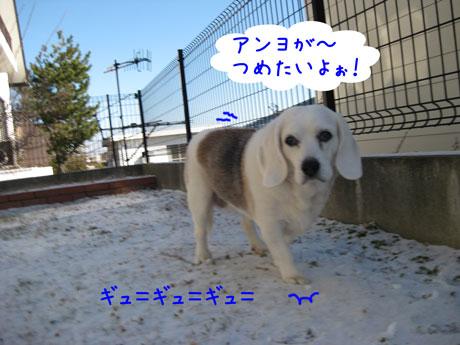 2_20110117125444.jpg