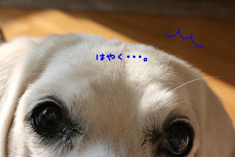 2_20110118100724.jpg