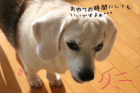 2_20110119180209.jpg