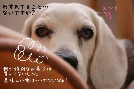 2_20110120103438.jpg