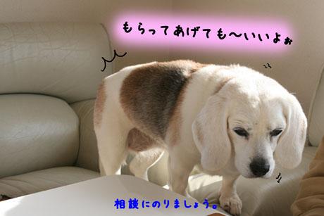 2_20110121162359.jpg