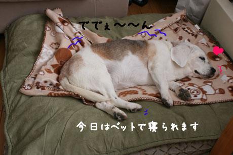 2_20110122122949.jpg