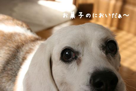 2_20110127161059.jpg