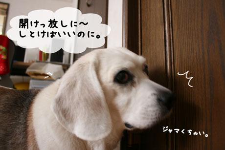 2_20110128170800.jpg