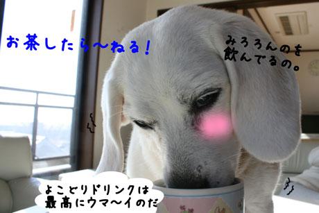 2_20110130155038.jpg