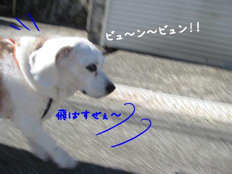 2_20110131161453.jpg