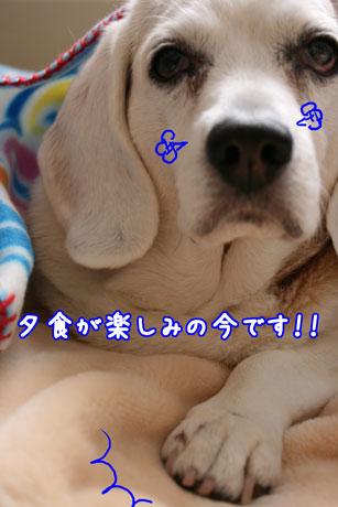2_20110208141733.jpg