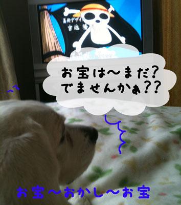 2_20110213185154.jpg