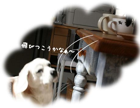 2_20110221140331.jpg