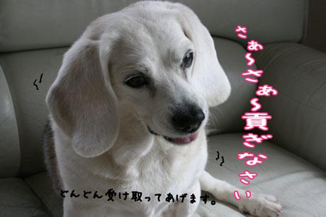 2_20110224173726.jpg