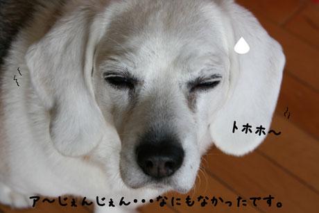 2_20110227144110.jpg