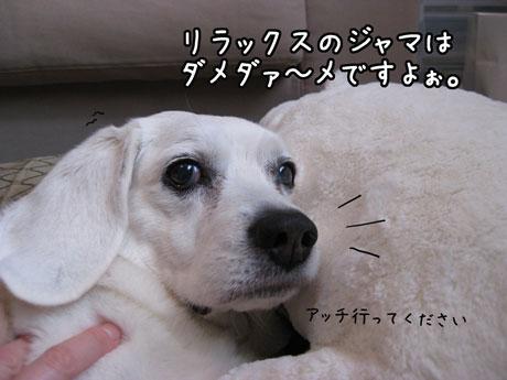 2_20110228151331.jpg
