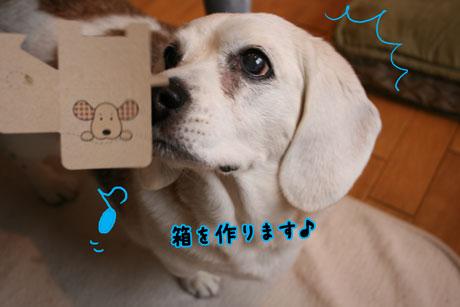 2_20110303151707.jpg