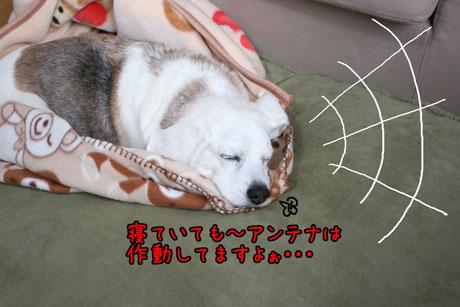 2_20110306124854.jpg