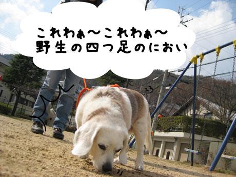 2_20110308144623.jpg