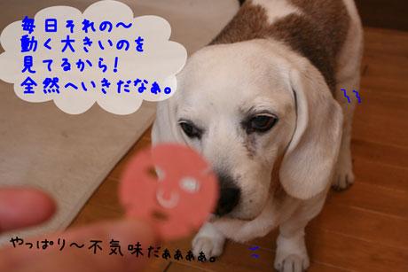 2_20110309110849.jpg