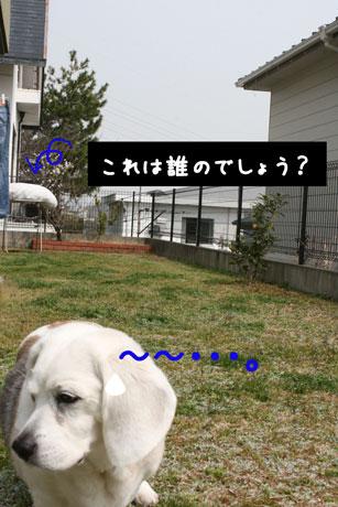 2_20110315144428.jpg