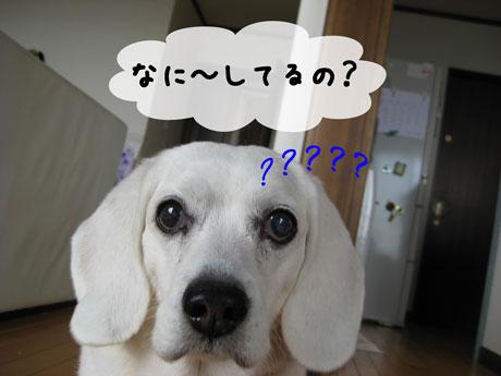 2_20110320133643.jpg